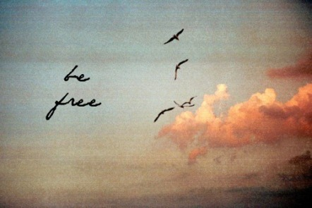 be-free-birds-photography-sky-Favim.com-575687